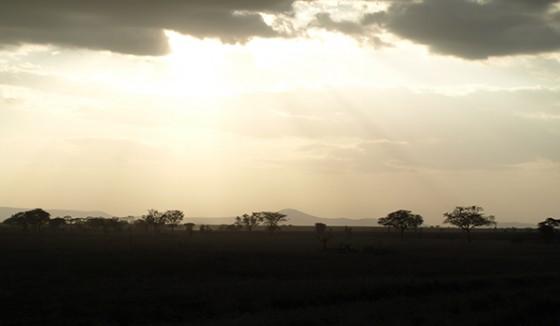 Luces y sombras en el Serengeti. Por Udare