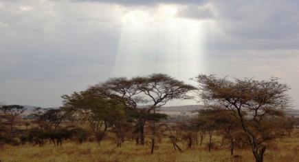 Parque Nacional Serengeti. Por Udare