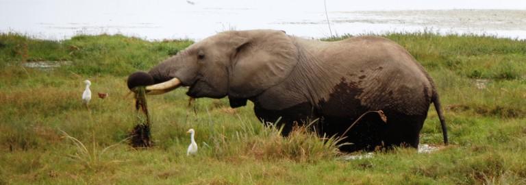 Amboseli. Por Udare