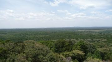 Panorámica bosque Kakamega. Wikipedia