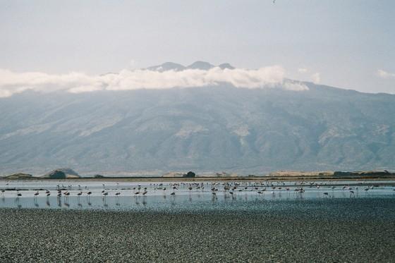 Flamencos en el lago Natron. Wikipedia