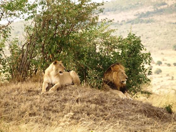 Masai Mara. Por Udare