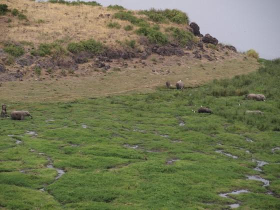 Elefantes en el Parque Nacional de Amboseli. Por Udare