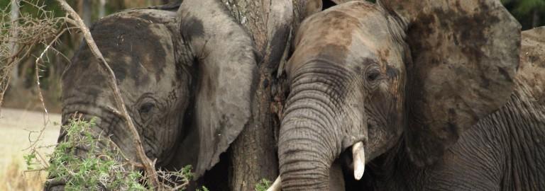 Serengeti. Por Udare