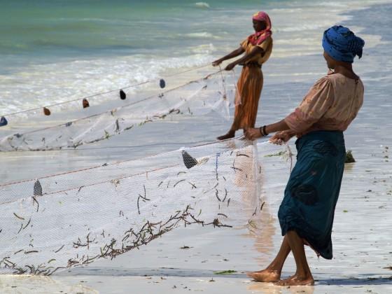 Zanzibar, recolección de algas. Por Udare