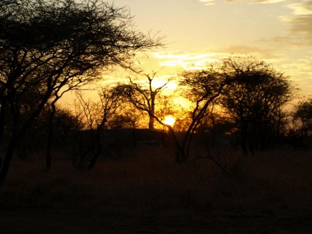 Anocheciendo en Serengeti. Por Udare