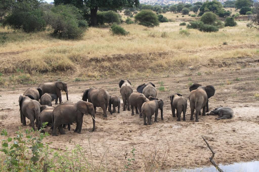 Elefantes en Tarangire. Por J. Vicente