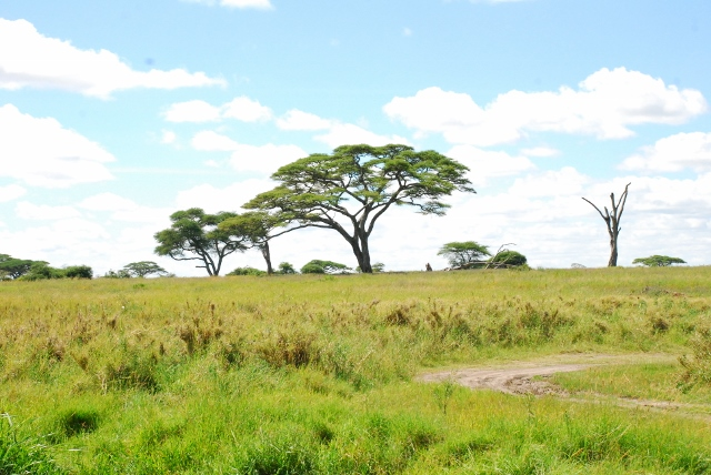 Verde Serengeti. Por Marga