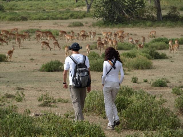 Caminando entre impalas. Por Udare