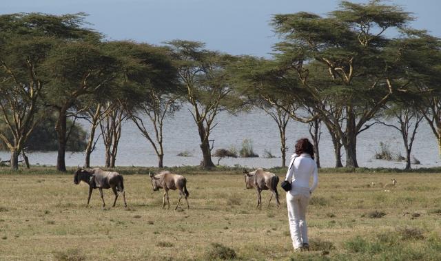 Caminando con los ñus. Por Udare