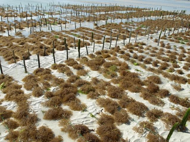 Cultivos de algas. Por Udare
