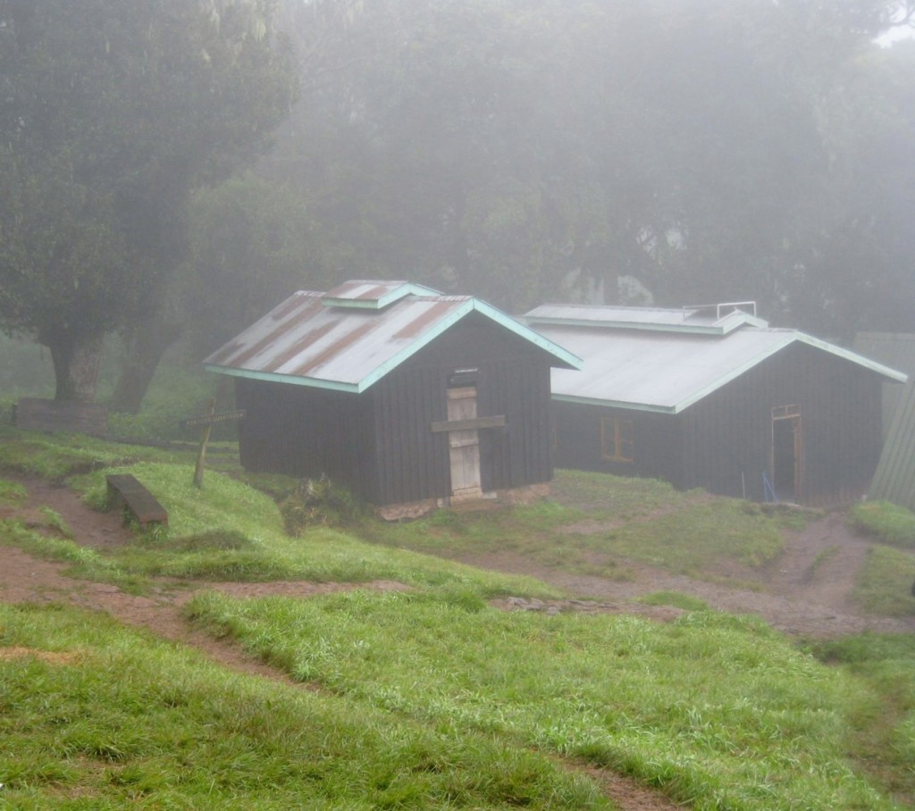 La bruma en las faldas del Kilimanjaro. Por Sol M.