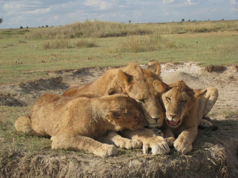 Estampa familiar en Serengeti. Por Sol M.