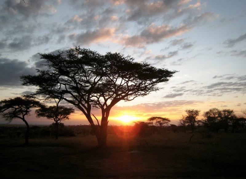 Anochecer en Serengeti. Por Sol M.