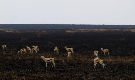 Serengeti quemado. Por Udare