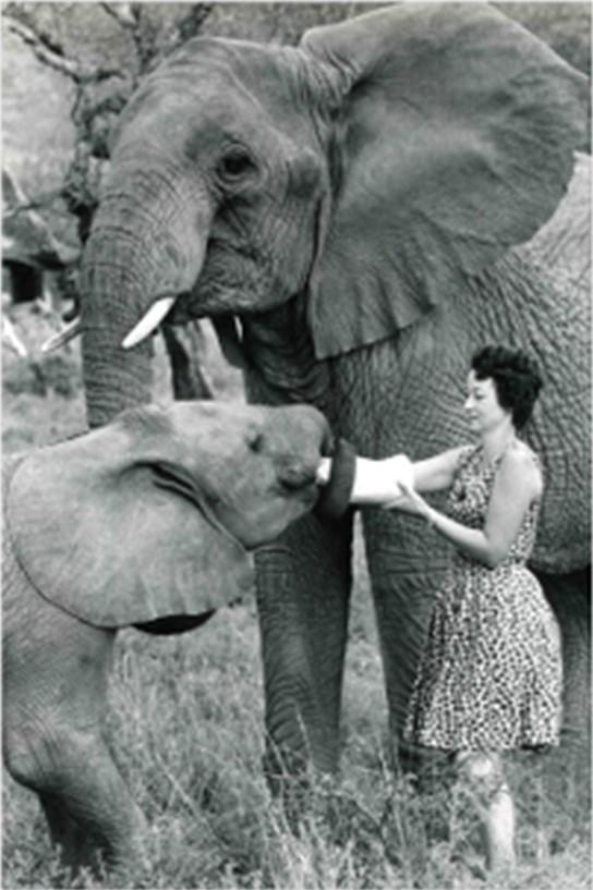Daphne Sheldrick. Fuente: www.sheldrickwildlifetrust.org