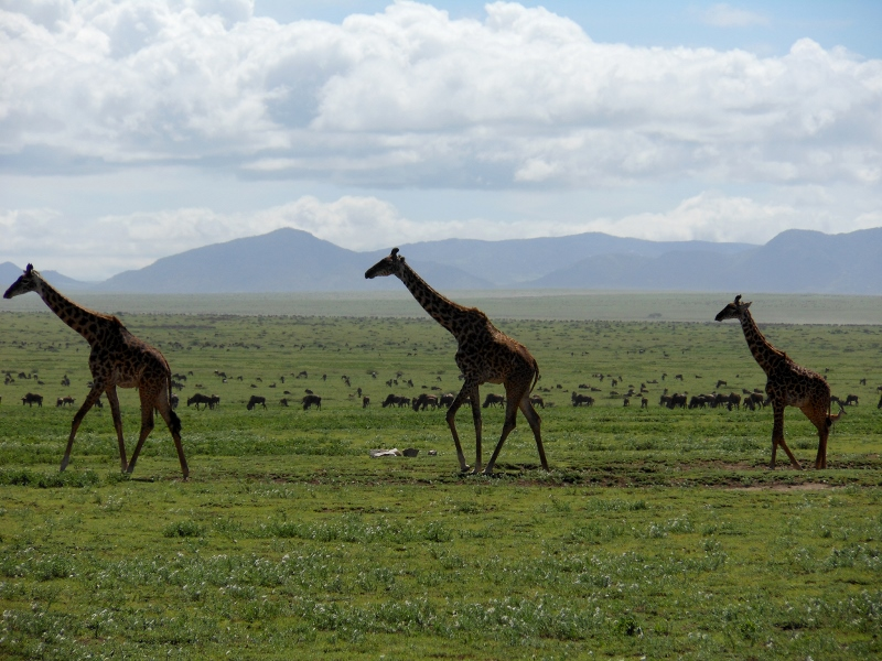 Ngorongoro. Por Colleta