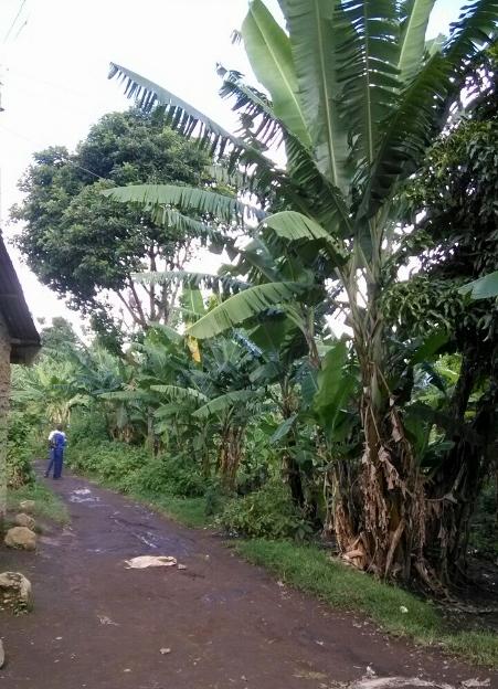 Zonas rurales de Arusha. Por Raquel