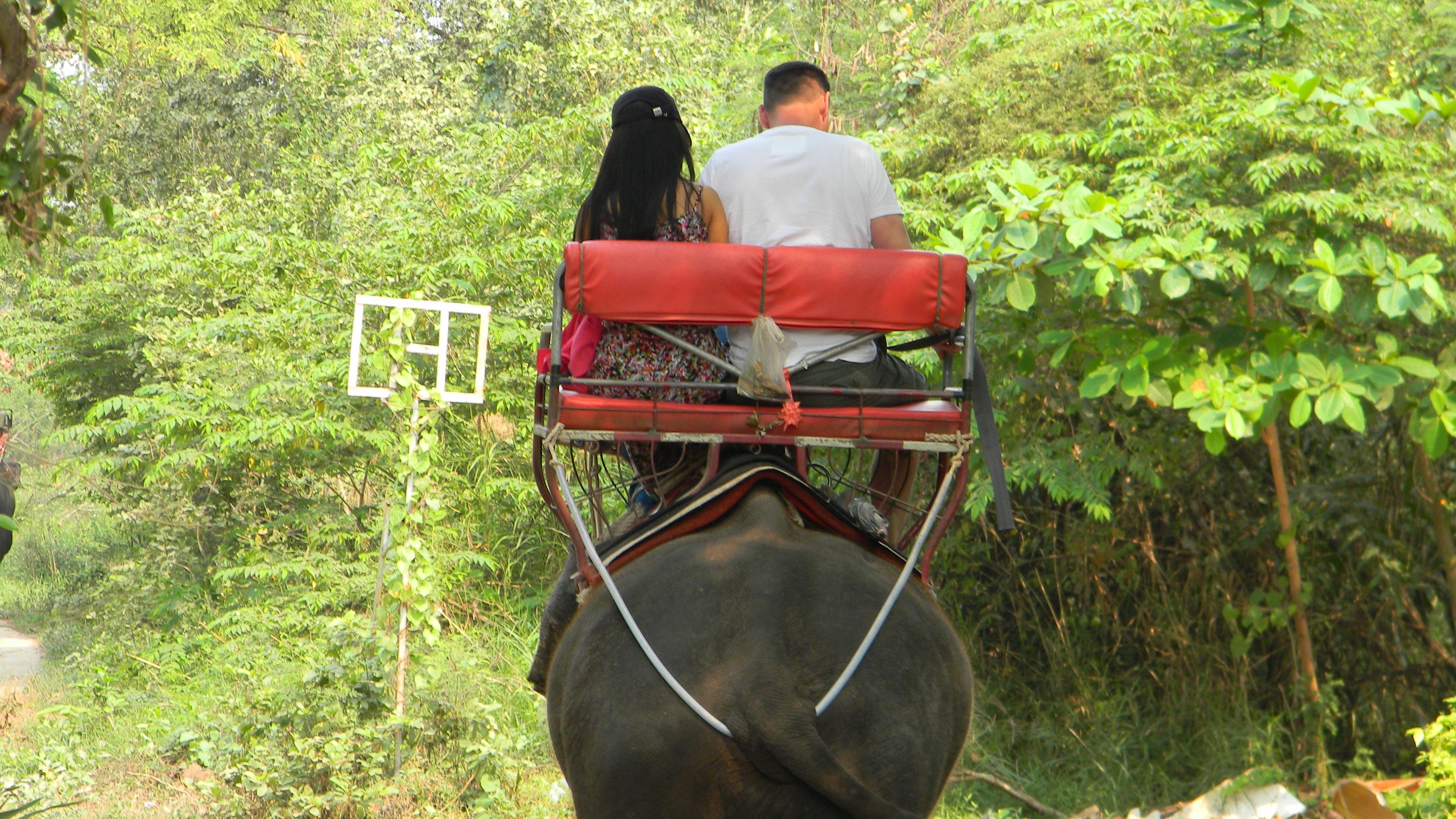 Paseos con elefantes. Por FAADA