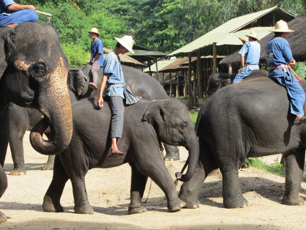 Centros de elefantes. Por FAADA