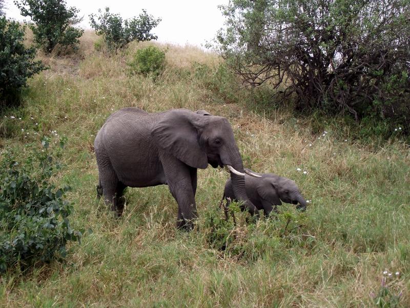 Elefantes en Tarangire. Por Raúl