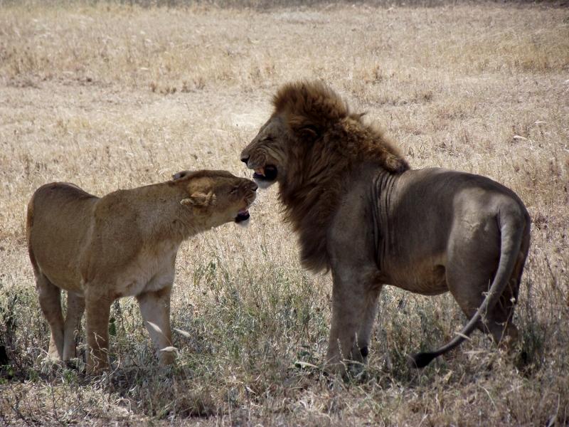 Los grandes iconos de Serengeti. Por Raúl