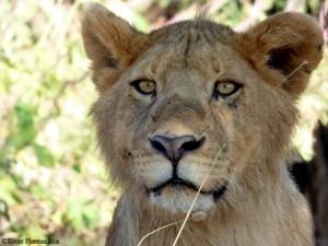 Momentos Serengeti. Por Xavier
