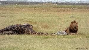 Momentos en Serengeti. Por Xavier