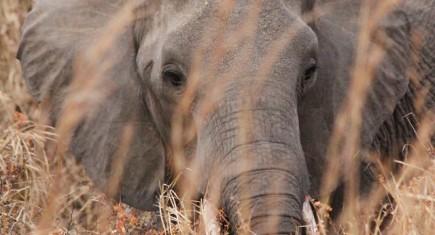 Elefante en Mikumi. Por Delia