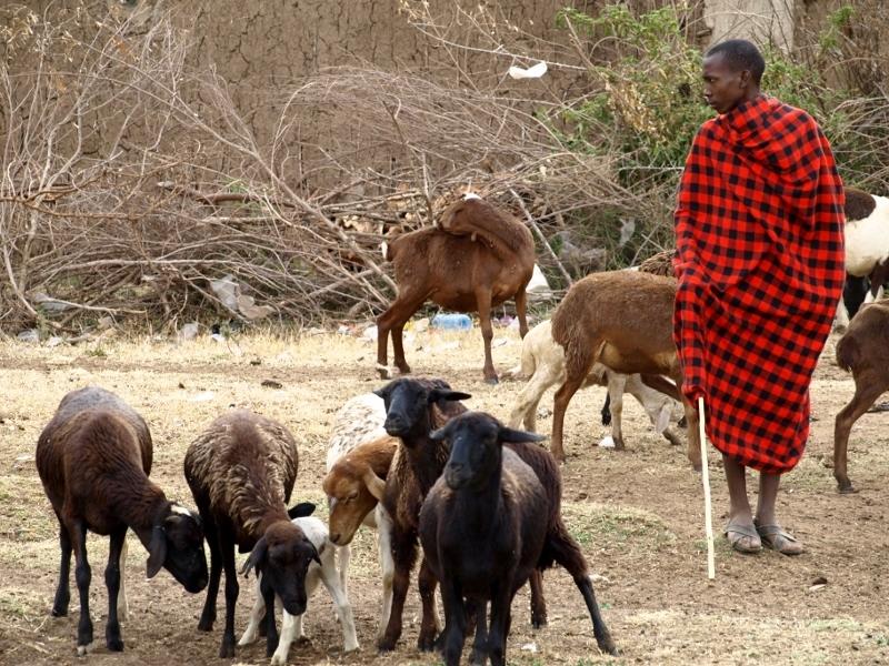 Masai pastoreando en Masai Mara. Por Udare