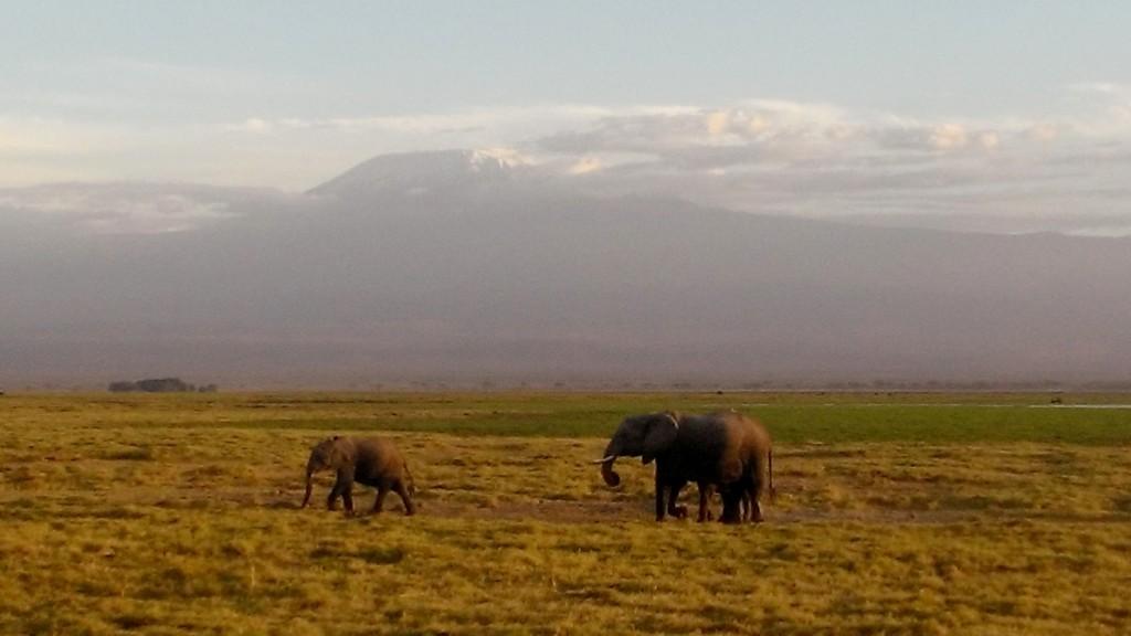 Amboseli, elefantes y Kilimanjaro. Por Marta