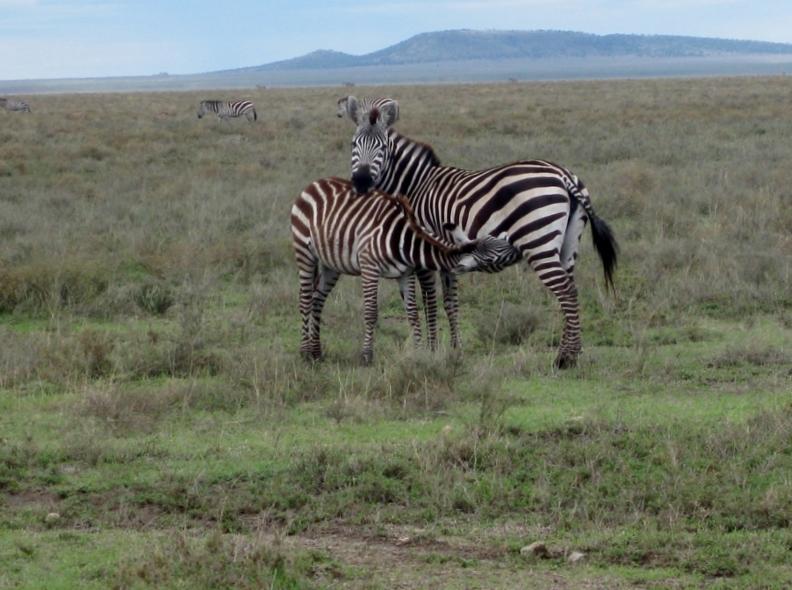Ngorongoro. Por Mar
