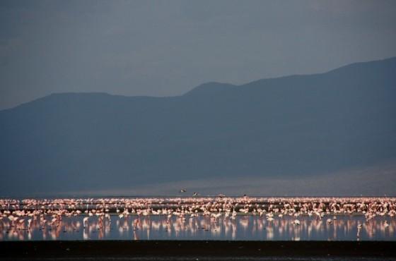 Lago Natron. Por Santiago