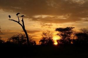 Increíble puesta de sol en Serengeti. Por Santiago