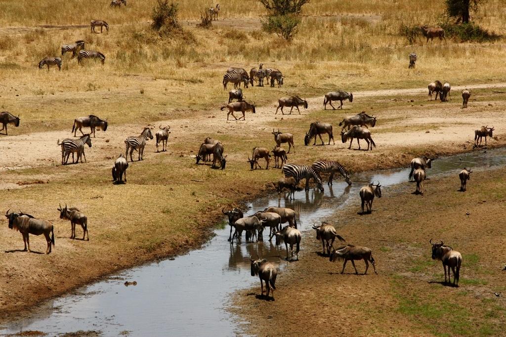 Abundancia de fauna en Tarangire. Por Santiago