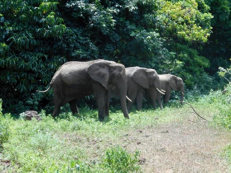 Elefantes en Manyara. Por Eduardo