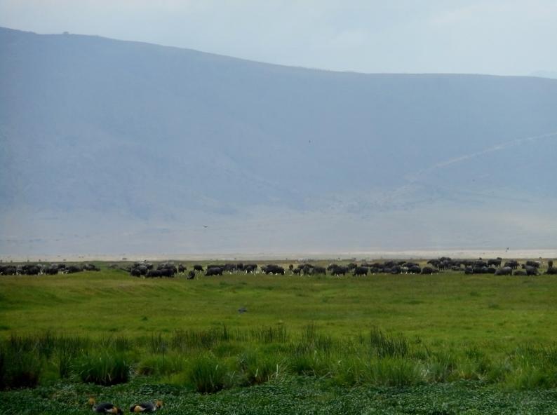 Ngorongoro, al fondo la pared de la caldera. Por Eduardo