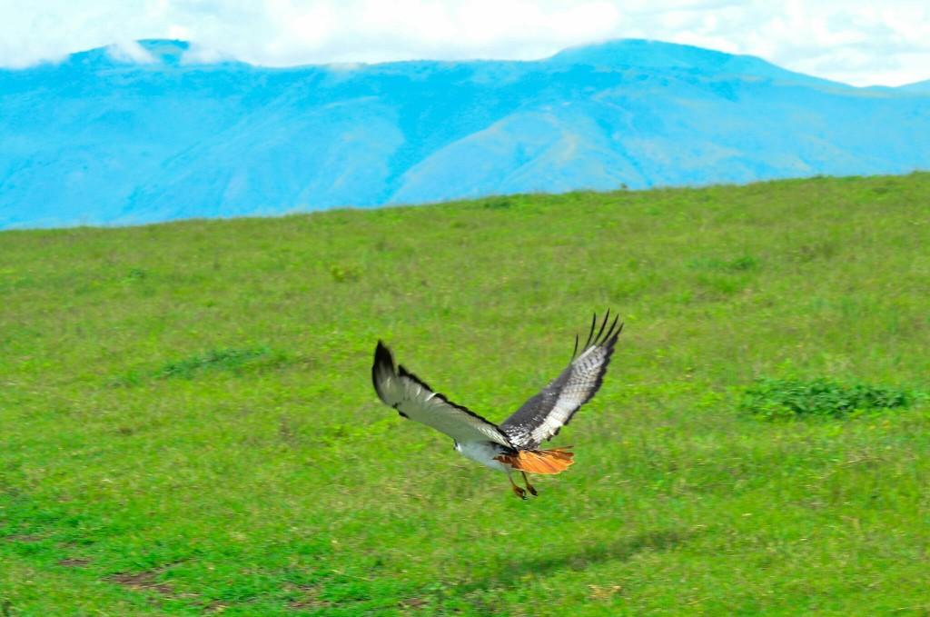 Las aves en el paraíso. Por Laura