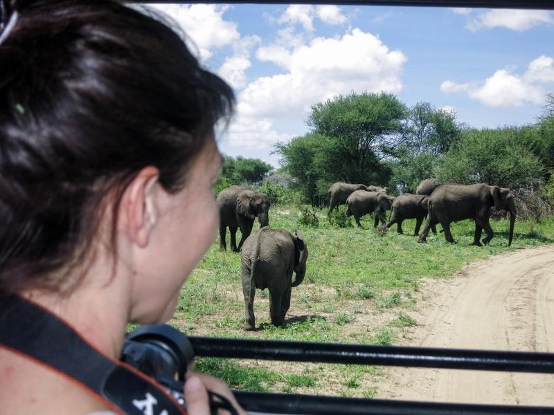 Grandes manadas de elefantes en Tarangire. Por Laura
