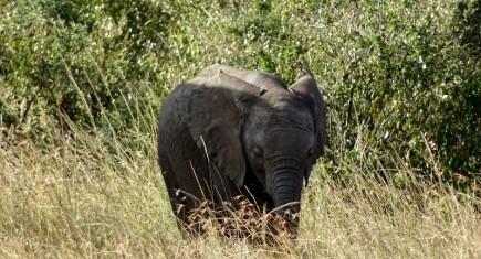 La tranquilidad del elefante. Por Irantzu