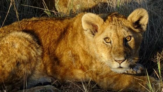Cachorro en Serengeti. Por Irantzu