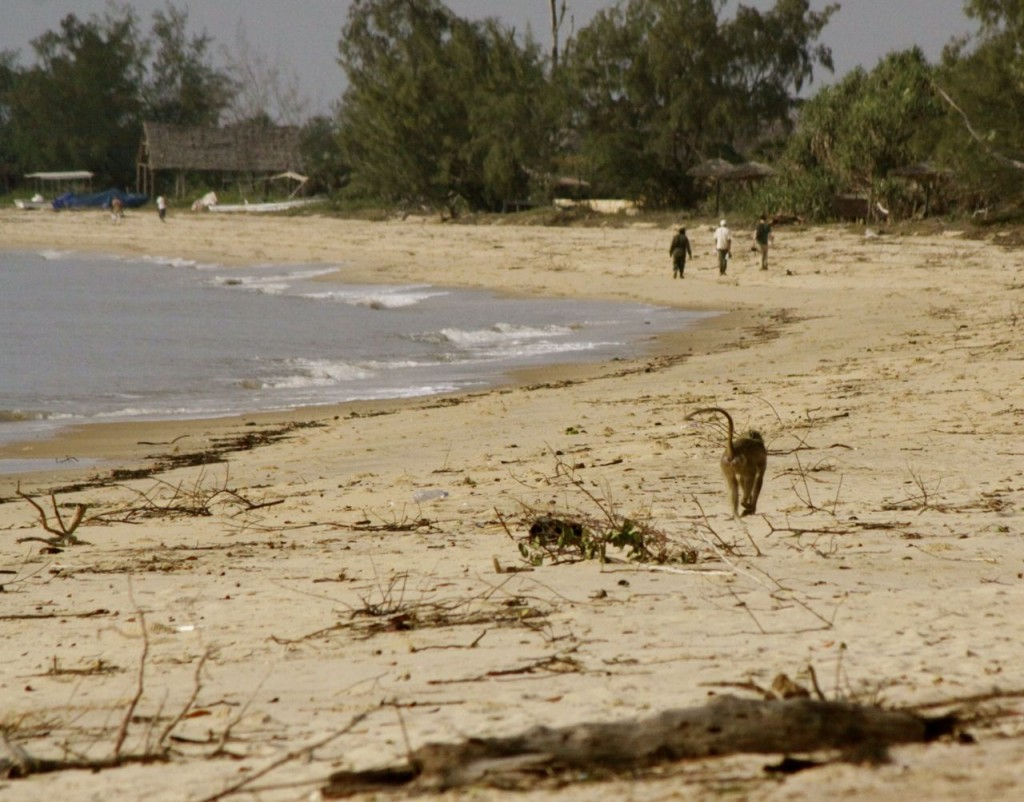 Playa de Saadani, Por Delia