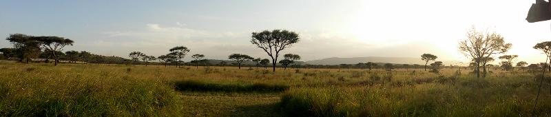Despertar en Serengeti. Por Angie