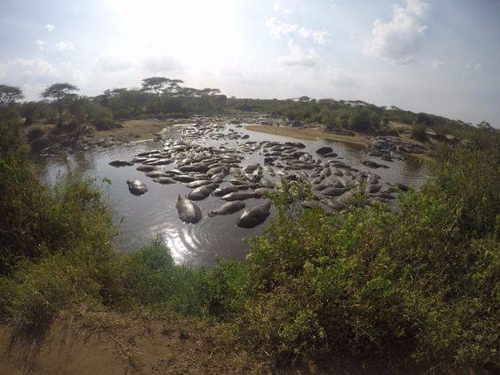 ippo pool en Serengeti. Por angie
