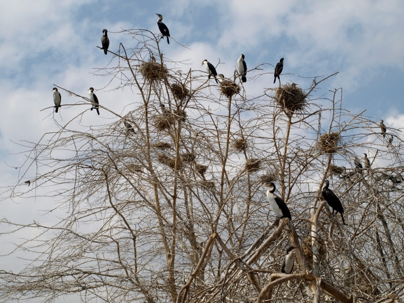 Aves en Lago Naivasha. Por Udare