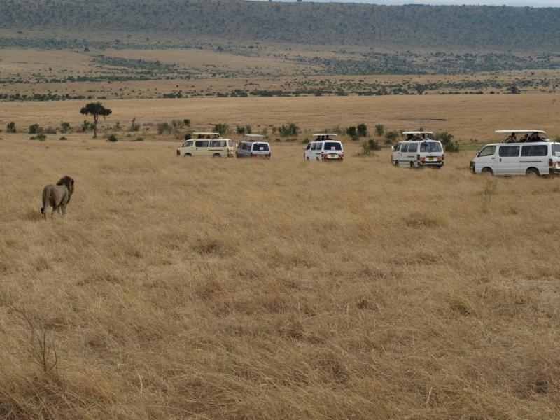 Vehículos fuera de pista esperando el paso del león. Por Udare