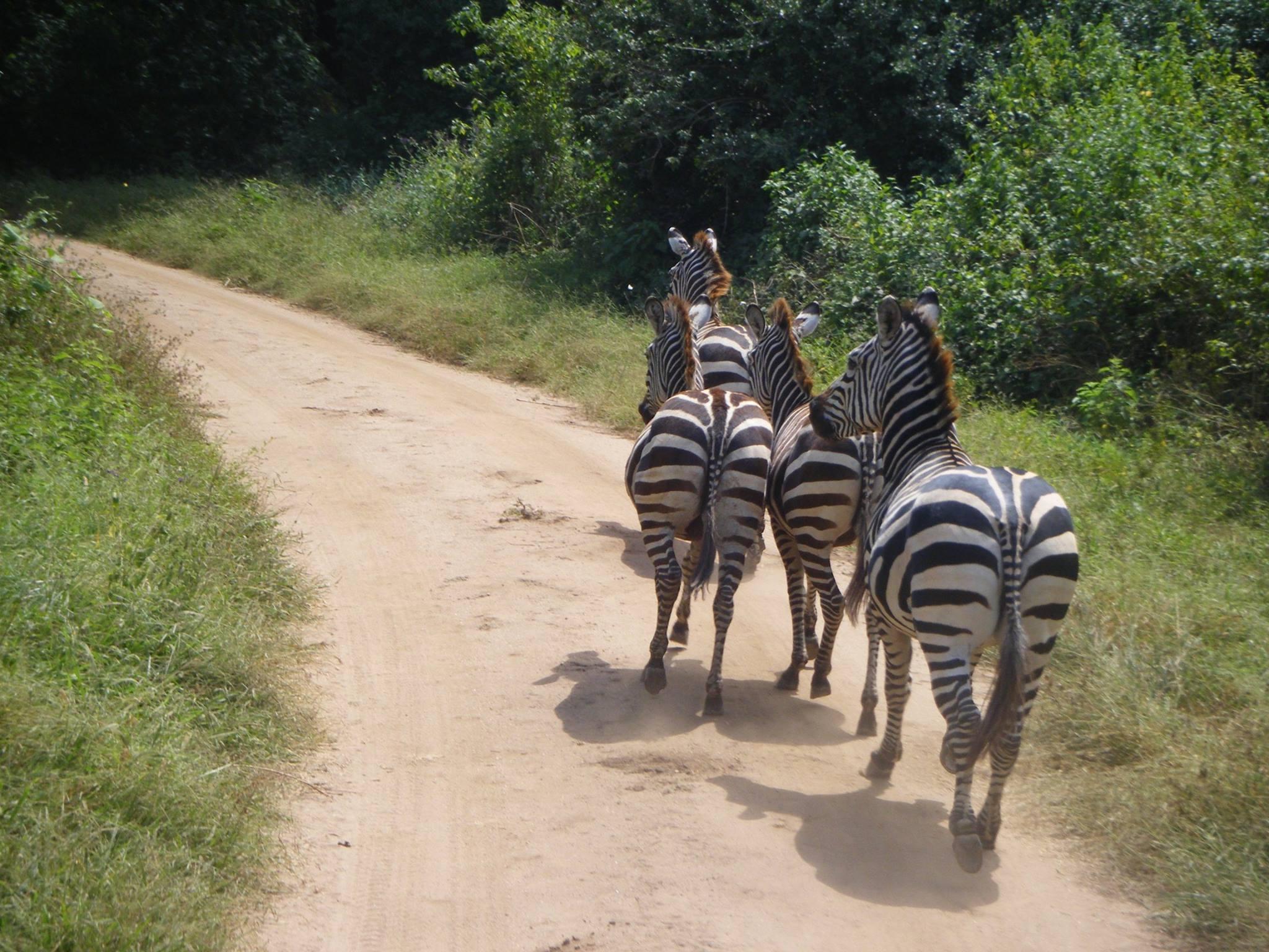 Densidad de tráfico en Manyara. Por Raquel
