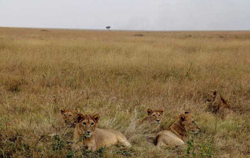 Hermanos en Serengeti. Por Jesús María