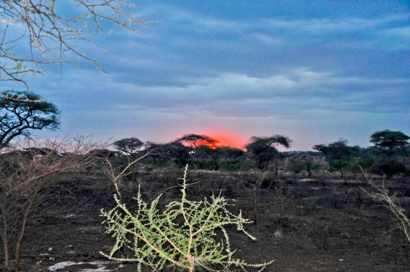 Atardecer en Serengeti. Por Paula