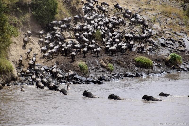 Cruce del río Mara. Por Ed